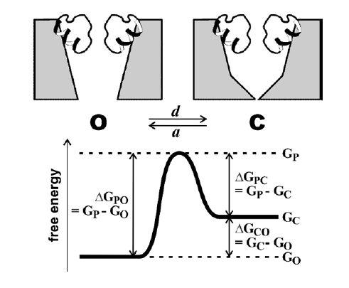 types of tissue engineering regenerative medicine wiring