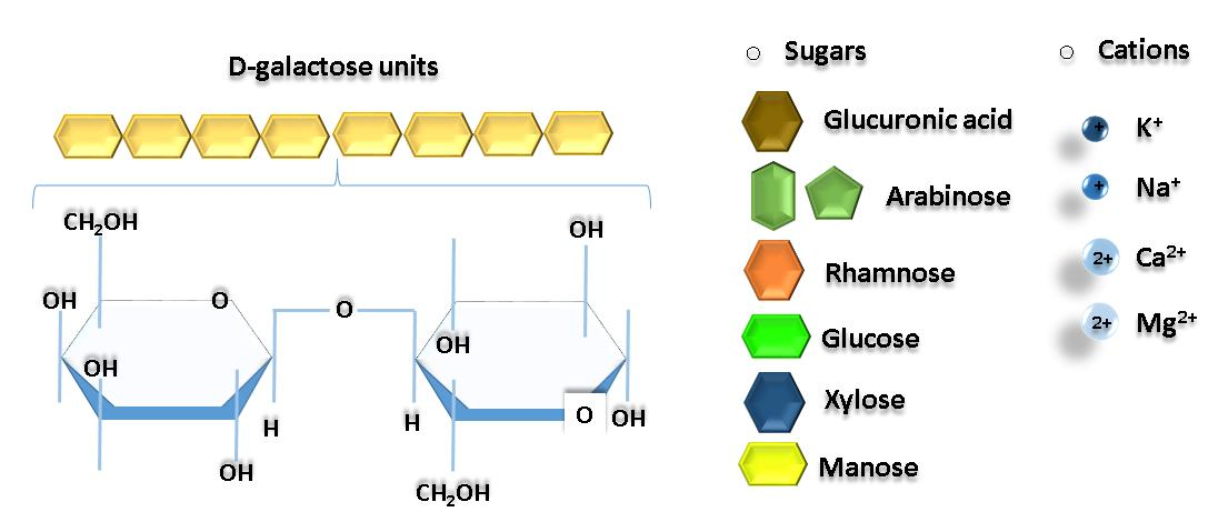 protein a biological polymer Polymers are substances made up from many smaller sub-units, chemically joined together these smaller sub-units are molecules called monomers this diagram represents a number of monomers.