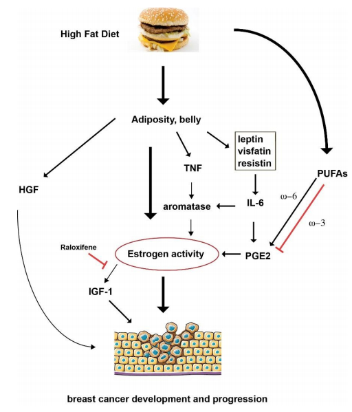 high fat diet and breast cancer